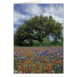 USA, Texas, Marble Falls Paintbrush and Greeting Card