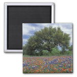 USA, Texas, Marble Falls Paintbrush and Square Magnet