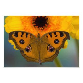 USA, WA, Sammamish, Tropical Butterfy 2 Art Photo