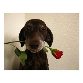 valentine rose pointer postcard