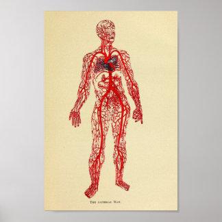 Vintage 1920 Artery Anatomy Art Print