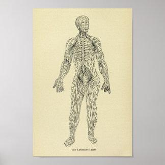 Vintage 1920 Lymphatic System Anatomy Art Print