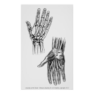 Vintage - Anatomy of the Hand Poster