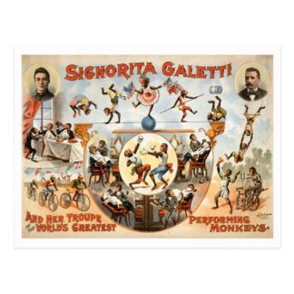 Vintage Circus Galetti and Performing Monkeys Postcard