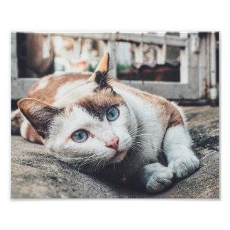 Vintage Colors Cat Photo Print