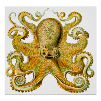 Vintage Ernst Haeckel Octopus in Yellow Poster