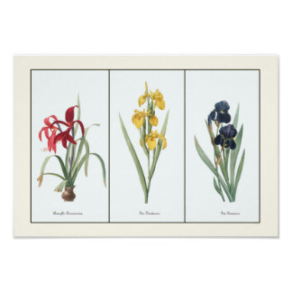 Vintage Floral Triptych Botanical Art Print
