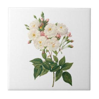 Vintage Flowers Floral Blush Noisette Rose Redoute Small Square Tile