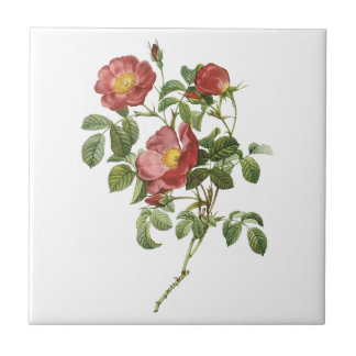 Vintage Flowers Floral Red Rose of Love by Redoute Small Square Tile