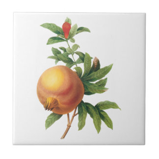 Vintage Food Fruit, Pomegranate by Redoute Small Square Tile