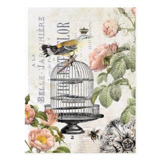 Vintage French bird postcard
