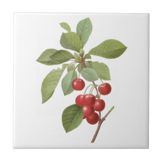Vintage Fruit Cherry Food, Cherries by Redoute Small Square Tile