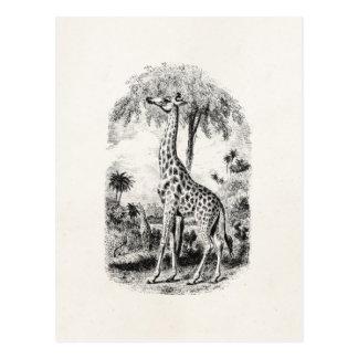 Vintage Giraffe Personalized Animal Illustration Postcard