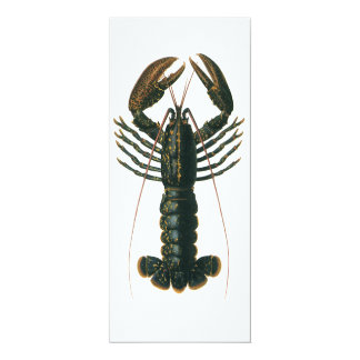 Vintage Lobster, Marine Ocean Life Crustacean 10 Cm X 24 Cm Invitation Card