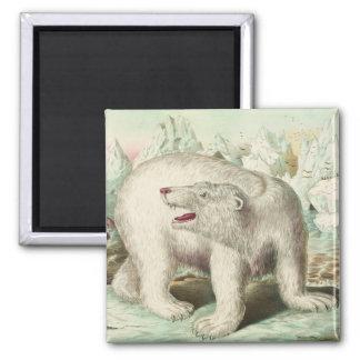 Vintage Polar Bear Art Square Magnet