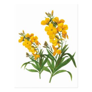 Vintage yellow flowers   botanical illustration postcard