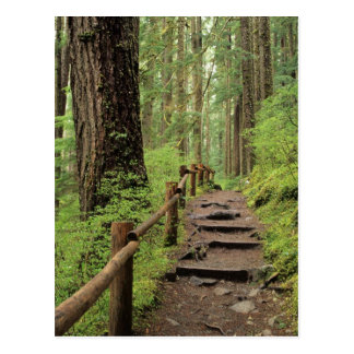 WA, Olympic NP, Sol Duc Valley, rainforest Postcard
