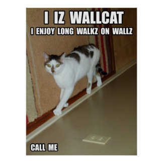 Wall Cat Poster