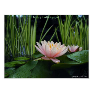 Water lilly after rain  poster