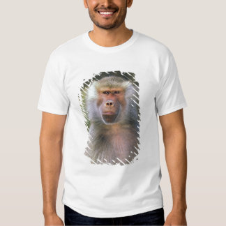 West Africa. Hamadryas baboon, or papio T Shirts