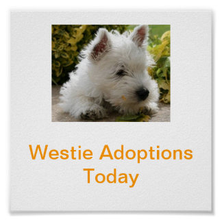West Highland White Terrier Adoption Today Signs W Poster
