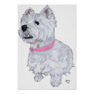 West Highland White Terrier Looking Up Poster