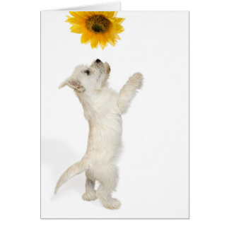 Westie Pup And Sunflower Greeting Card