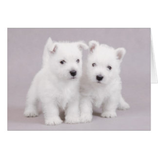 Westie puppies greeting card