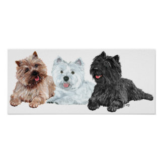 Westie with Two Cairn Terriers Poster