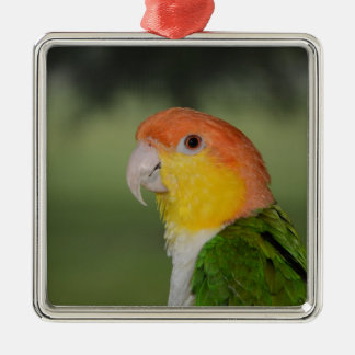 White Bellied Caique Parrot Outdoors Silver-Colored Square Decoration