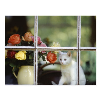 White cat sitting in window next to flowers postcard