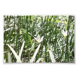 White Flower Art Photo