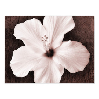 White Hawaiian Hibiscus Sepia Tropical Flower Photographic Print