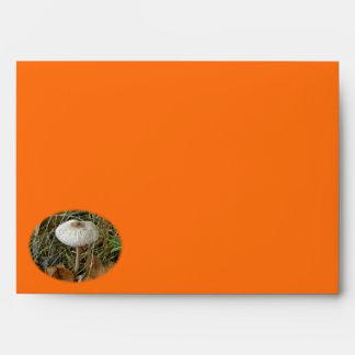 White Parasol Mushroom Envelope