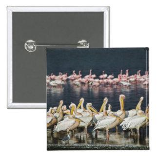 White Pelicans, Pelecanus onocrotalus, Lake 15 Cm Square Badge