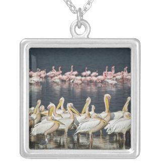 White Pelicans, Pelecanus onocrotalus, Lake Square Pendant Necklace