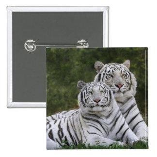 White phase, Bengal Tiger, Tigris 15 Cm Square Badge