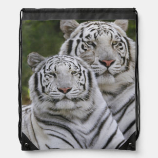 White phase, Bengal Tiger, Tigris Drawstring Backpack