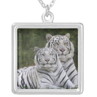 White phase, Bengal Tiger, Tigris Square Pendant Necklace