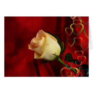 White rose on red background note card