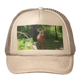 White Tail Deer Buck Hat