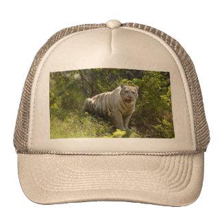 White tiger 008 cap