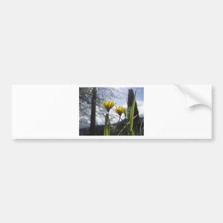 Wildflowers illuminated by the sunlight bumper sticker