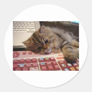 Will work for a catnip round sticker