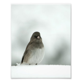 Winter Bird Photo Art