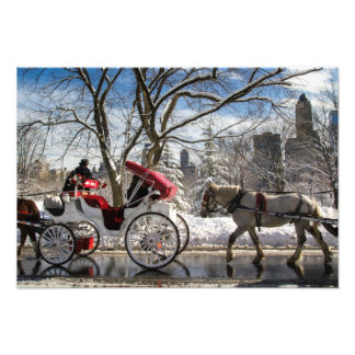 Winter Carriage Horses Photograph