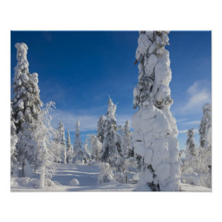 Winter landscape in Lappland Poster