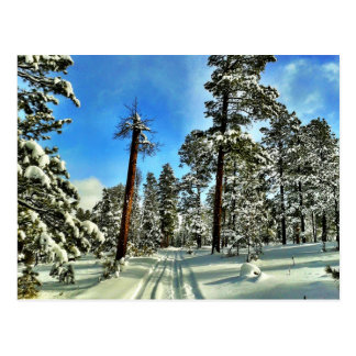 Winter Snow Trails in the Woods Trees Forest Gifts Postcard