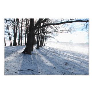 Winter Trees, Boston area, 12x8 photo