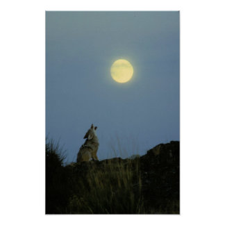 Wolf Howling Full Moon Poster